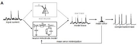 A calibration-free electrode compensation method | Neuroscience_technics | Scoop.it