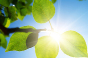 Hydrogen Energy the Chloroplast Way: Solar-to-fuel with the Artificial Leaf | Biomimicry | Scoop.it
