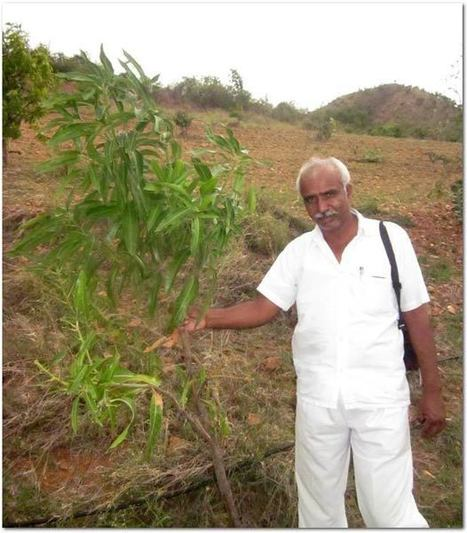 Gangi Setty and the Green Tree Foundation Project (India)   Sustainable Futures   Scoop.it