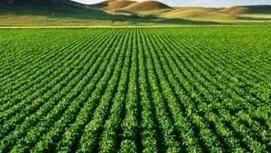 Maroc Agriculture durable: les jeunes innovent | CIHEAM Press Review | Scoop.it