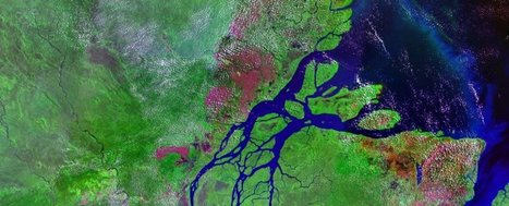Scientists just discovered a 1,000-km-long coral reef at the mouth of the Amazon | DiverSync | Scoop.it