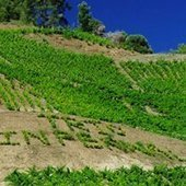 Vin d'Espagne: les nouveaux grenache s'allègent | Autour du vin | Scoop.it