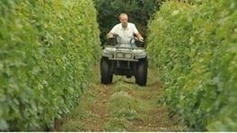 Hot summer yields vintage year for UK wine - ITV News | UK wine | Scoop.it