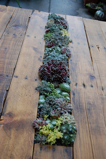 DIY Succulent Pallet Table | Far Out Flora | UpCycle | Scoop.it