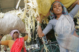 New dual-purpose sorghum: Food for people and livestock » ILRI news   Sustainable Livestock development   Scoop.it