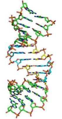 Expanding the code of life with new 'letters'   DNA & RNA Research   Scoop.it