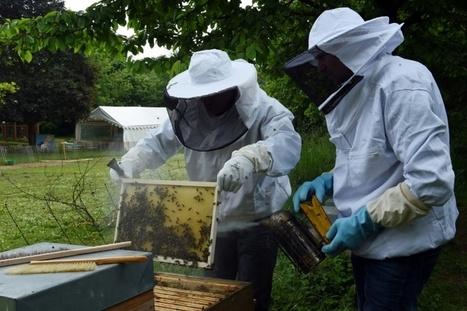 """17 villes favorables aux abeilles labellisées """"ApiCité""""   Attitude BIO   Scoop.it"""