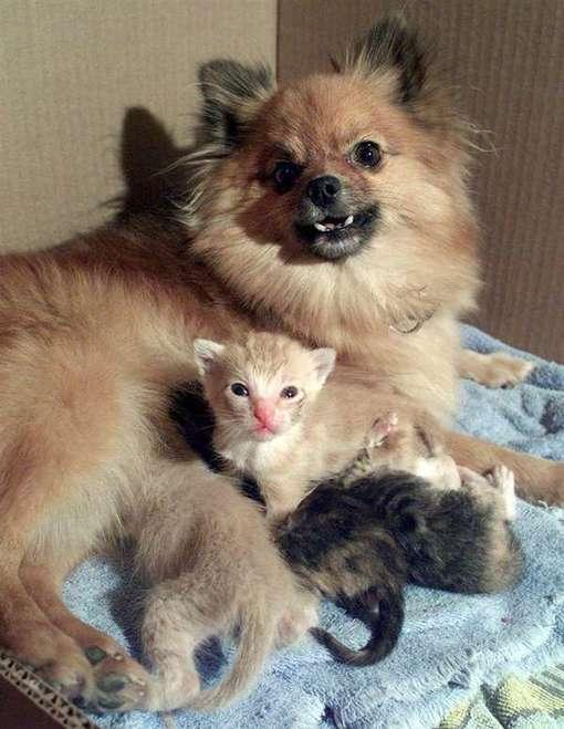 Ces animaux qui prennent soin d'autres bébés animaux vont vous émouvoir - Animaaaaals