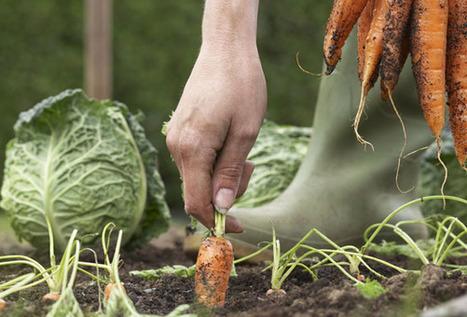 Organic Vegetable Gardening For Beginners - 7 Tips You Heard & Forgot | Best Home and Garden | Scoop.it