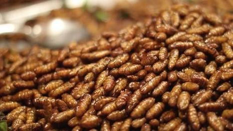 Could insects be the wonder food of the future? | Geography education | Scoop.it