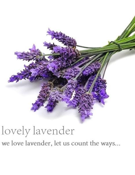 Loving Lavender | bien-etre skin care information | absolutelyzengeneva | Scoop.it