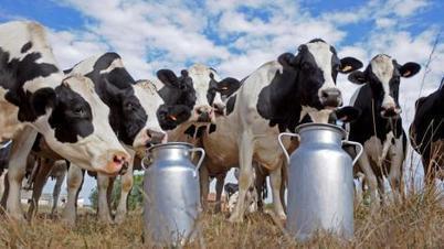 Les effets pervers de la sortie des quotas laitiers | Elevage | Scoop.it