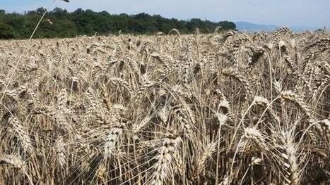 Matières première agricoles : des banques françaises spéculent toujours | Nature et Vie | Scoop.it