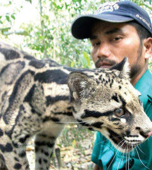Plight of animals turns Assamese poacher into conservationist | Wildlife Trafficking: Who Does it? Allows it? | Scoop.it
