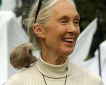 Jane Goodall: Animal Planet: Chimps, Chimpanzees | Jane Goodall | Scoop.it