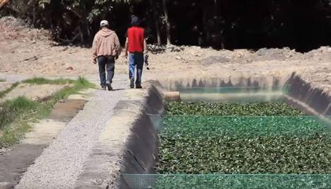 Filtros verdes: alternativa para el tratamiento de aguas residuales - Noticias   iAgua   Smart Water   Scoop.it