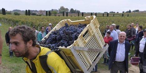 Saint-Emilion : les chaudes nuits des vendangeurs à Haut-Sarpe | Le vin quotidien | Scoop.it
