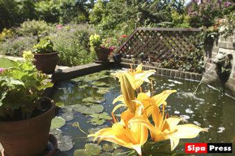 Les plantes aquatiques pour décorer un bassin de jardin - Linfo.re | Rescoop -Faune - Flore - Environnement | Scoop.it
