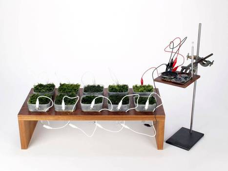 Tune in to Moss FM: Swiss designer uses the prolific plant to power a radio - The Independent | biophilic | Scoop.it