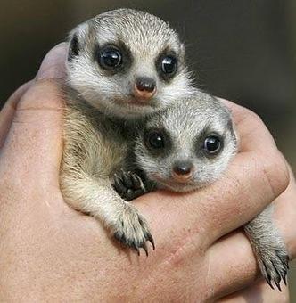 Unique Animals blogs: Cute Baby Animals 18, Baby Animals Cute Pictures Gallery   Cute Baby Animals   Scoop.it