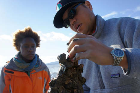 Bringing Oysters Back to the Bay | KQED | Sustain Our Earth | Scoop.it