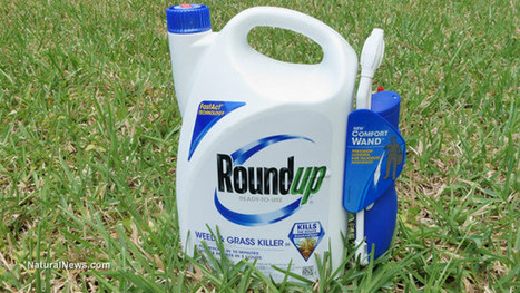 #DANGER '#Monsanto's #glyphosate #Roundup herbicide Disrupts Hormones - even with #Glyphosate exposures below regulation limits; [PROVEN #CARCINOGENIC @parts per BILLION'] | News You Can Use - NO PINKSLIME | Scoop.it