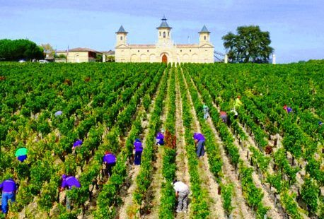 2012 Cos d'Estournel Vintage Harvest Interview Jean Guillaume Prats   Vitabella Wine Daily Gossip   Scoop.it