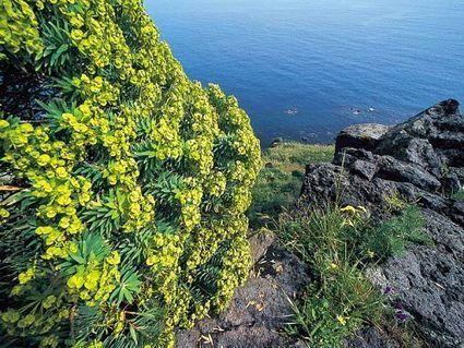 Riserve in Sicilia - Riserva Naturale Orientata La Timpa - Le tue Vacanze in Sicilia - VacanzeSiciliane.net | Vacanze In Sicilia | Scoop.it