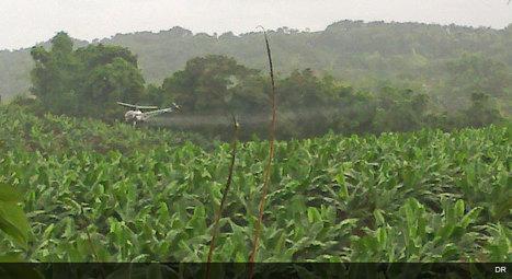 Guadeloupe. La mobilisation populaire contre l''épandage aérien reste encore assez faible. | Toxique, soyons vigilant ! | Scoop.it