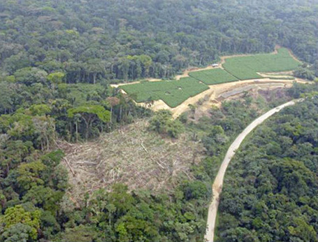 "Scientists say massive palm oil plantation will ""cut the heart out"" of Cameroon's rainforest 