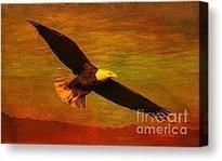Eagle Spirit Photograph by Deborah Benoit - Eagle Spirit Fine Art Prints and Posters for Sale | Beauty | Scoop.it