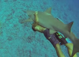 Shark Attack News: Video: Swimmer in Bora Bora Bear Hugs Shark and Goes For a Ride | All about water, the oceans, environmental issues | Scoop.it