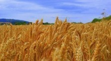 Report highlights vulnerability of global food systems | Food Security | Scoop.it