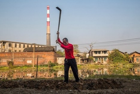 China's Polluted Soil Is Tainting the Country's Food Supply - Businessweek | Bees | Scoop.it