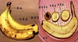 BANANAS with dark patches on yellow skin – Anti Deadly Cancer | Banana Facts and Rumors | Scoop.it