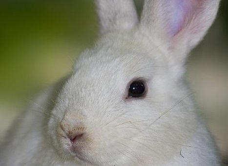 The EU Permanently Bans Cruel Animal Testing Practices for All Cosmetics   Animals R Us   Scoop.it