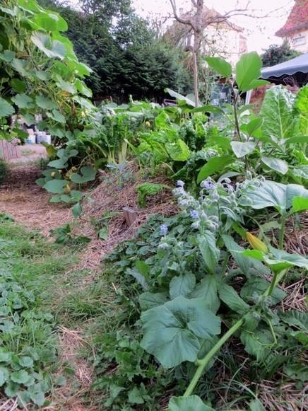 De la théorie à la pratique, les hauts et bas des jardins partagés | Innovation sociale | Scoop.it