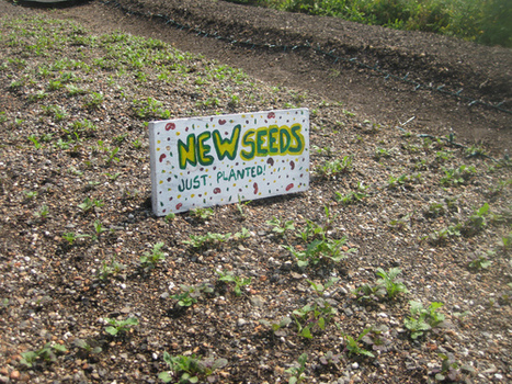 Photos: NRDC New York Visits Urban Farms | Mark Izeman's Blog | green streets | Scoop.it