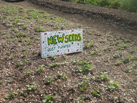 Photos: NRDC New York Visits Urban Farms | Mark Izeman's Blog | green streets | Scoop.it