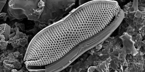 Des algues pour améliorer le photovoltaïque ? | Algues et énergies | Scoop.it