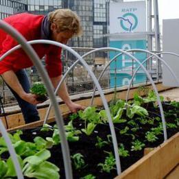 « Objectif 100 hectares », Paris passe au vert | Les colocs du jardin | Scoop.it