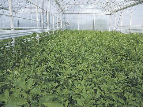 Innover en légume bio sous abri - Paysan Breton | Revue de presse professionnelle | Scoop.it