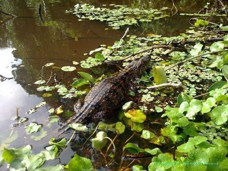 Le Costa Rica – Entre nature et tourisme de masse ! | carnet de voyage | Scoop.it