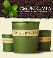 Monrovia.com - Monrovia Distinctively Better Plants & Flowers   Annie Haven   Haven Brand   Scoop.it