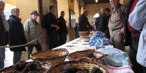 A Sarlat, on remet le couvert avec la truffe dès ce mercredi | Agriculture en Dordogne | Scoop.it