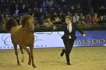 Villepinte : Championnat du monde du cheval arabe - Sports | La revue de presse des élèves de 2nde - semaine A | Scoop.it