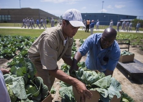 A growing experience: Prison gardens transform inmates who tend to them | enjoy yourself | Scoop.it