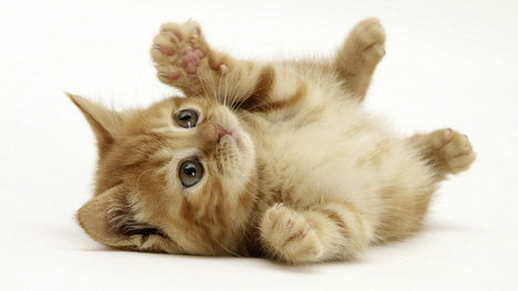 How Kittens Conquered The Internet | Simply Senia | Interesting & Odd Pet Topics | Scoop.it