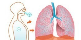 Breathing Life into Lung Microbiome Research - Scientist | Microbiome | Scoop.it