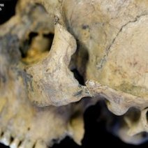 Gladiator Heads? Mystery of Trove of British Skulls Solved : DNews | Archéologie | Scoop.it